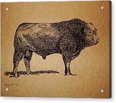 Acrylic Print featuring the drawing French Limousine Bull by Larry Campbell