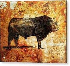 French Limousine Bull 10 Acrylic Print