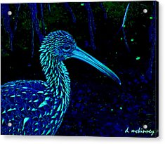 Acrylic Print featuring the painting Limpkin by David Mckinney