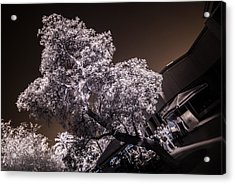 Lincoln Road Tree Acrylic Print