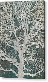 Linden Tree Acrylic Print