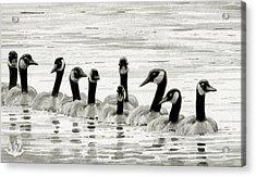Line Of Geese Acrylic Print