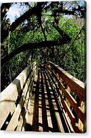 Lines Of Shade Acrylic Print by Will Boutin Photos