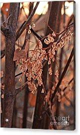 Lingering Seeds Acrylic Print