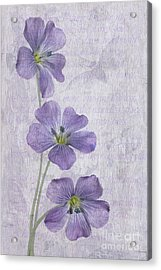 Linum Acrylic Print by John Edwards