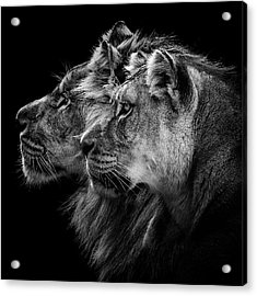Lion And  Lioness Portrait Acrylic Print