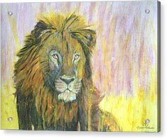 Lion Acrylic Print by Dylan Williams