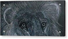 Lion Eyes  African King Detail Acrylic Print
