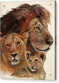 Lion Family Portrait Acrylic Print by Suzanne Schaefer