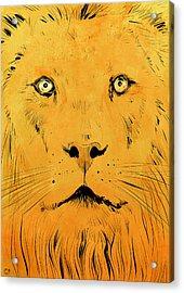 Lion Acrylic Print by Giuseppe Cristiano