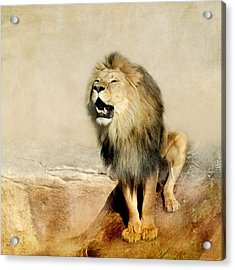 Lion Acrylic Print by Heike Hultsch