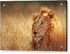 Lion In Grass Acrylic Print by Johan Swanepoel