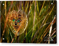 Lion In The Grass Acrylic Print by Amy Cicconi