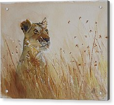 Lion In The Weeds Acrylic Print