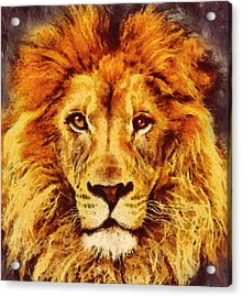 Lion Of Africa Acrylic Print