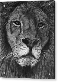 Lion Of Judah Acrylic Print by Bobby Shaw