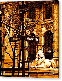 Lion On 5th Avenue Acrylic Print by Dan Hilsenrath