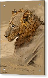 Lion Portrait Acrylic Print by Aaron Blaise