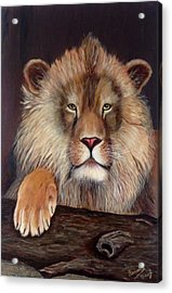 Lion Acrylic Print by Renate Voigt