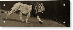 Lion Sketch Acrylic Print by Aaron Blaise