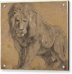 Lion Sketch Acrylic Print by Paul Ruebens
