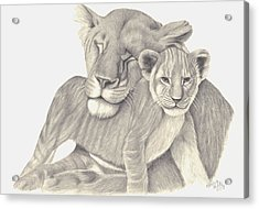 Acrylic Print featuring the drawing Lioness And Cub by Patricia Hiltz
