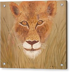 Lioness In Waiting Acrylic Print