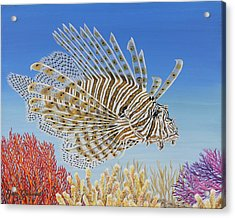 Lionfish And Coral Acrylic Print