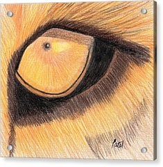 Lions Eye Acrylic Print by Bav Patel