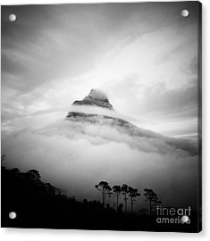 Lions Head Acrylic Print by Neil Overy