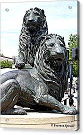 Lions Of Marco Island Acrylic Print