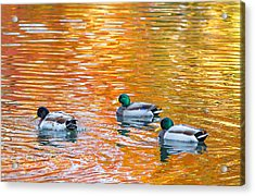 Acrylic Print featuring the photograph Liquid Autumn by Carl Amoth