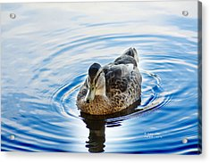Liquid Blue Mallard Acrylic Print by James Ahn