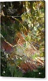 Liquid Leaves Acrylic Print by Rich Collins