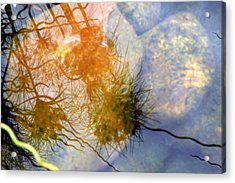 Acrylic Print featuring the photograph Liquid Light Stone by Allen Carroll