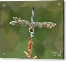 Liquify Dragonfly Acrylic Print
