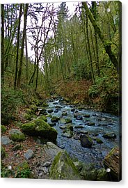 Listening To The Creek Acrylic Print by Charles Lucas