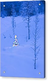 Lit Christmas Tree At Twilight Acrylic Print by Kevin Smith