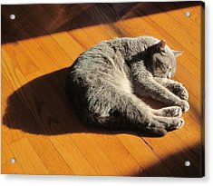 Lit Lounging Lucy Acrylic Print by Guy Ricketts