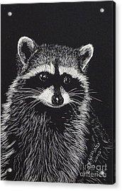 Little Bandit Acrylic Print