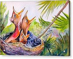 Little Beaks Acrylic Print by Patricia Piffath