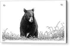 Little Bear Acrylic Print