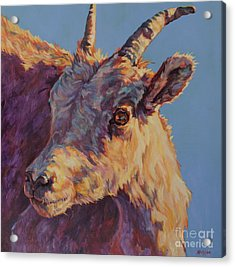 Little Bighorn Acrylic Print by Patricia A Griffin
