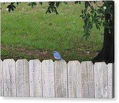 Acrylic Print featuring the photograph Little Bird by Beth Vincent