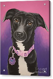 Little Black Dog Acrylic Print