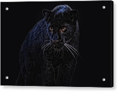 little black Jag Acrylic Print by Joachim G Pinkawa
