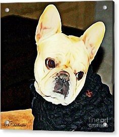 Little Black Sweater Acrylic Print by Barbara Chichester