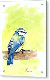 Little Blue Bird Acrylic Print by Lynda Cookson