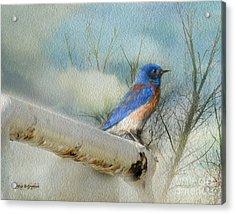 Little Blue Bird Acrylic Print by Rhonda Strickland