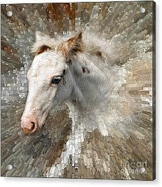Little Blue Eye Acrylic Print by Liz  Alderdice